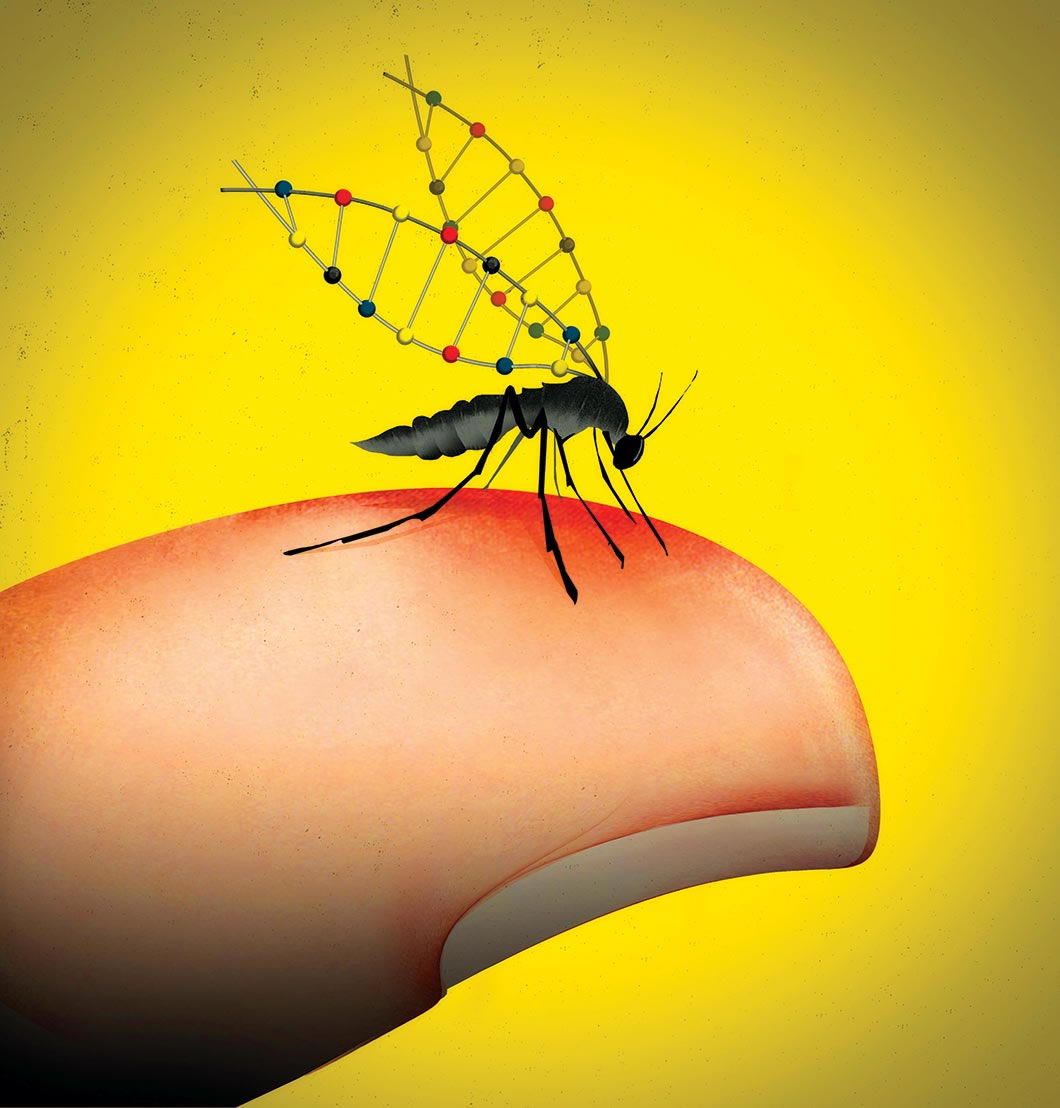 Illustration of mosquito on finger