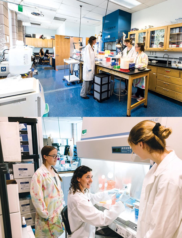 Schultz lab