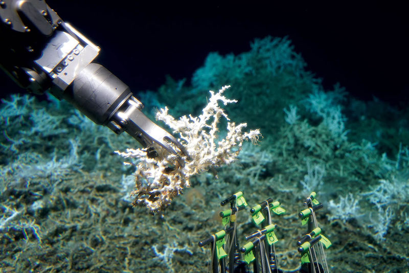 Robot arm collecting coral sample.